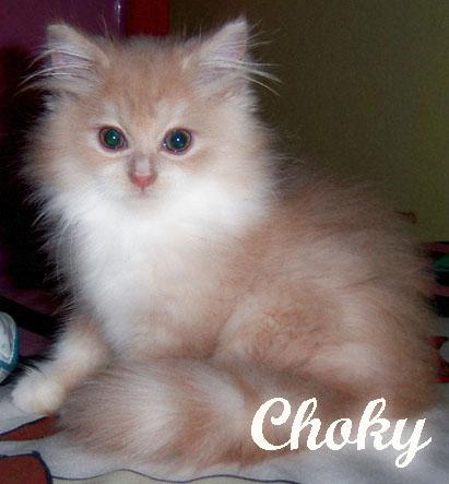 Pesananpaklong Merawat Anak Kucing